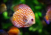 Czego potrzebujesz, by zacząć hodować rybki?