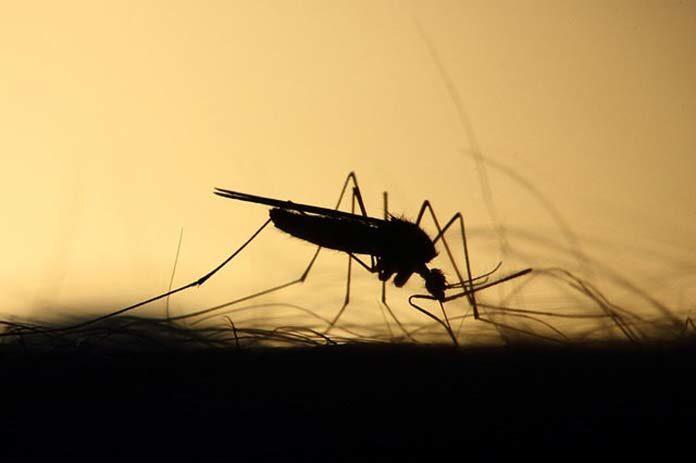 Przygotuj się na walkę z insektam