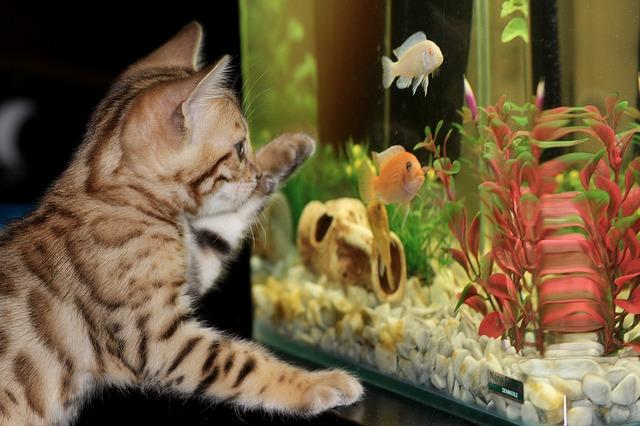 Akwarium – podwodne królestwo w twoim domu