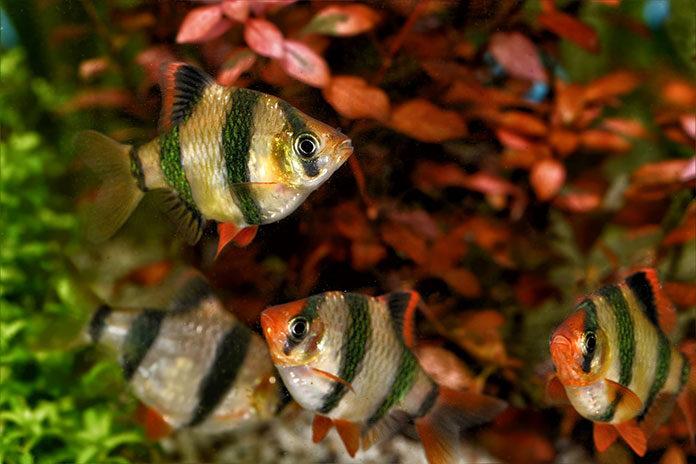Odpowiednia dieta dla twoich rybek - jaki pokarm wybrać