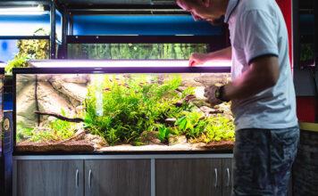 Jakie akcesoria musisz mieć w swoim akwarium
