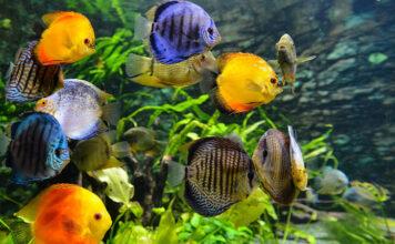 Jak zbudować funkcjonalne akwarium