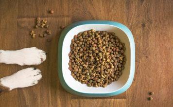 Jedzenie dla psów