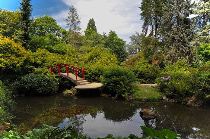 oczko wodne w ogrodzie - jakie ryby i rośliny wybrać